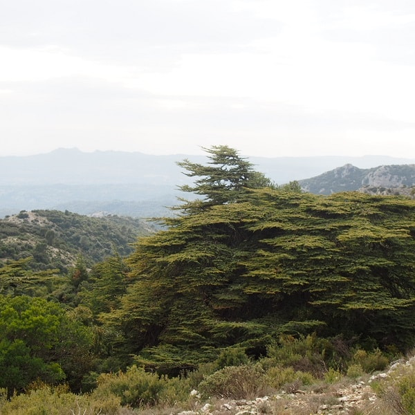 Chemins de randonnée en Luberon